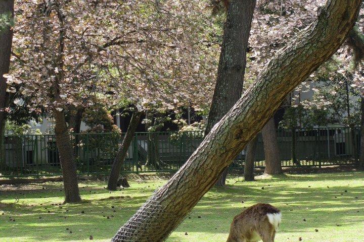 Gardens of Nara Park