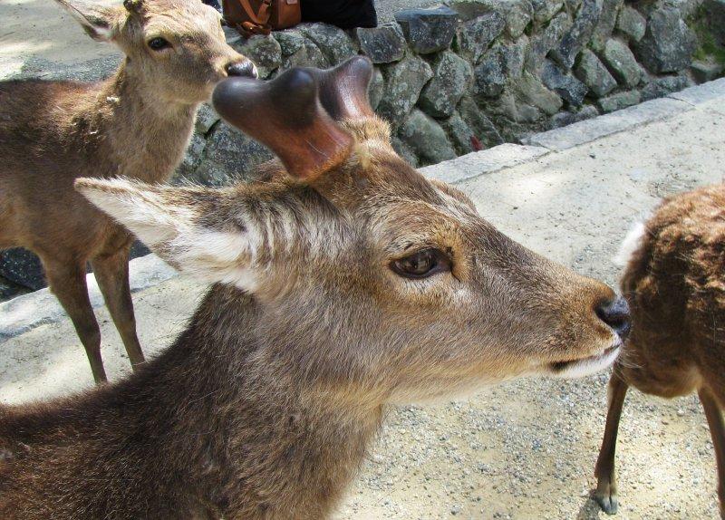 Deer evrywhere!
