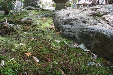The moss garden of Yoshiken