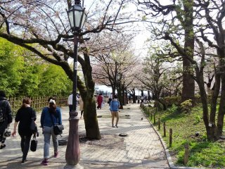 สวนแห่งนี้มีต้นซากุระอยู่มากมายหลายต้น