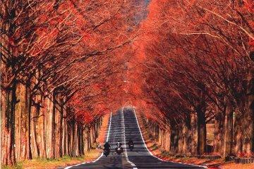 Makino Pic-land
