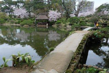 สวนชูเคเอน