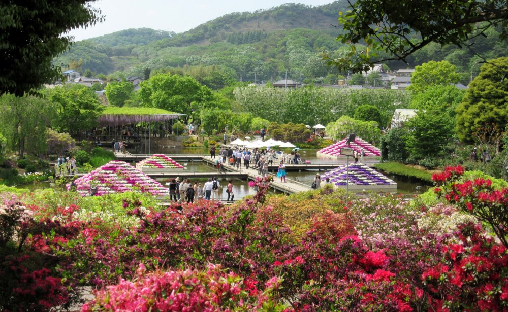 Ashikaga Flower Park in May is a paradise