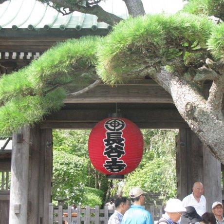 Kamakura Walks