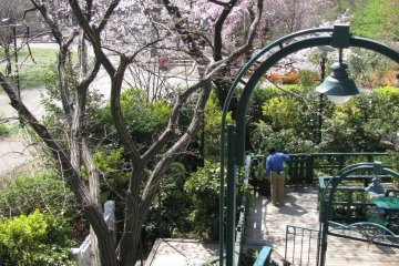 Nice views of sakura