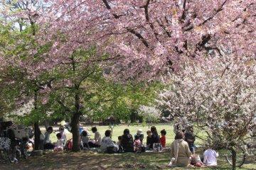 Numerous picnics