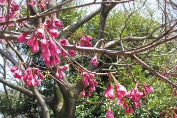 Bright spring blossoms