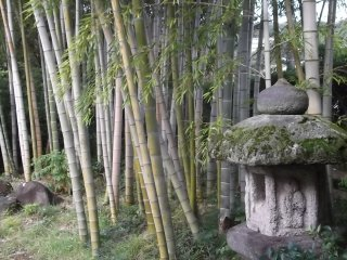 A bamboo grove and ancient lantern