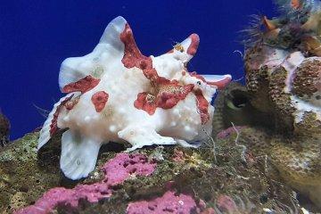ตัวนี้ดูคล้ายปะการัง