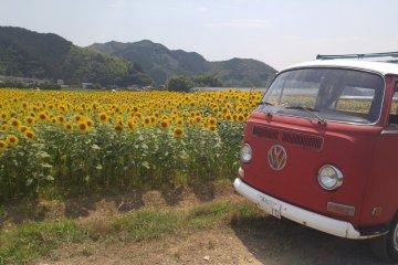 A VW Campervan completes the ensemble