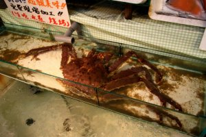 A live crab in one of the many seafood vendors along Sakaimachi Street.