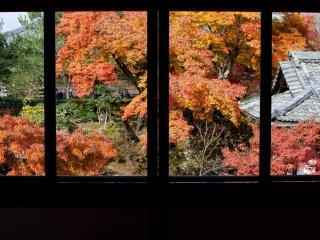 La vue depuis la fenêtre du restaurant est impressionnante, particulièrement pendant l'automne et le printemps