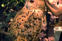 Harajuku Owl's Forest