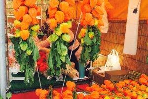 คนญี่ปุ่นใช้กิ่งของดอกโคมจีนมาประดับบ้าน เมื่อเปลือกของโคมจีนแห้ง จะสามารถมองเห็นลูกสีส้มสดสวยภายใน