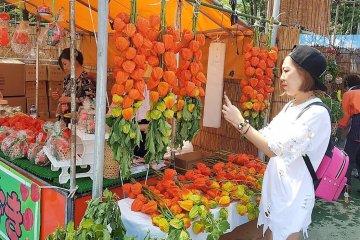 สาวพลอยก็ตกหลุมรักดอกโฮะซุกิ หรือดอกโคมจีนเช่นกัน