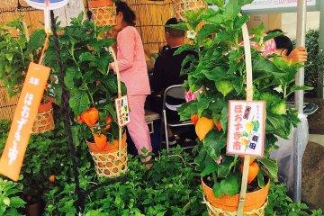 กระถางโฮะซุกิ หรือดอกโคมจีนกับฟุริน (furin) หรือกระดิ่งลม