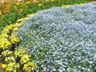 Цветочная клумба в парке Хамаматсу