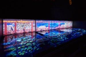 Art Aquarium 2017