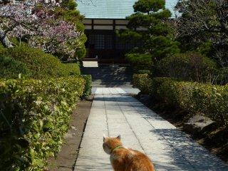 중앙 홀 돌에 앉아 있는 고양이