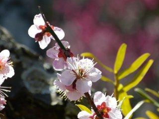 예쁘다! 봄이 오고 있다