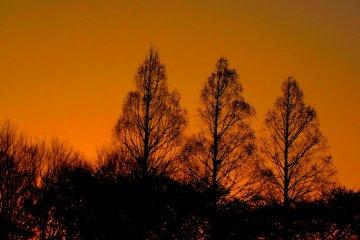 해가 지더라도 서 있는 나무들은 공원을 주시하고 있다