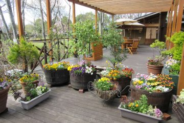 Кафе в саду