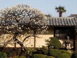 Perfection at Gotokuji Temple in Setagaya