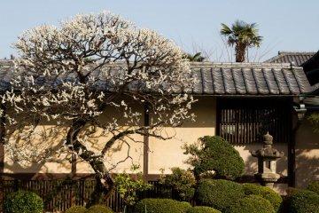 Gotokuji Temple, Setagaya