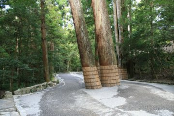 <p>The path to the shrine is surrounded by pristine ancient forest</p>
