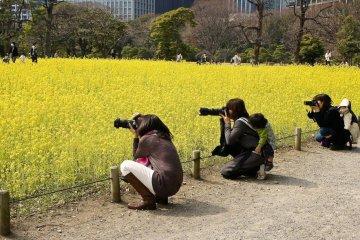 ดอกไม้สีเหลืองที่สวนฮะมะริกกุ