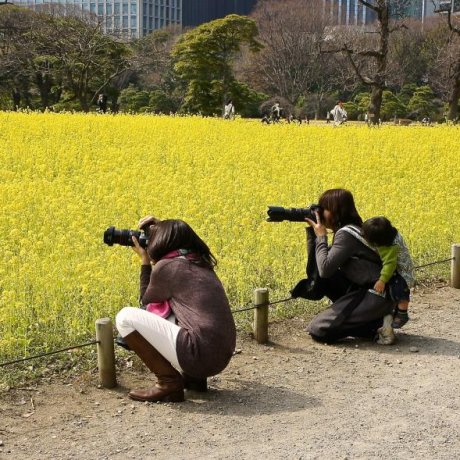 Yellow Flowers at Hamarikyu Garden