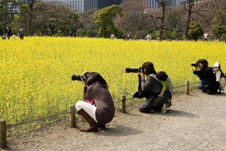 Những Bông Hoa Vàng Ở Vườn Hamarikyu