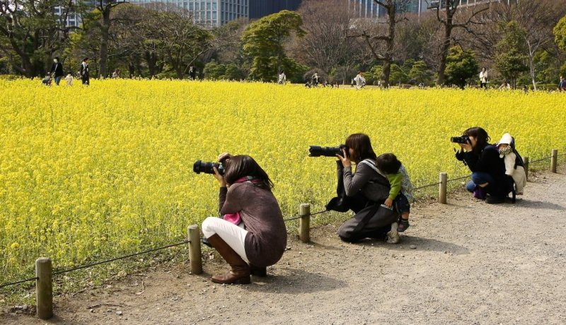 Mothers, with a kid on their back, take snaps of the older kids playing with the yellow blossoms