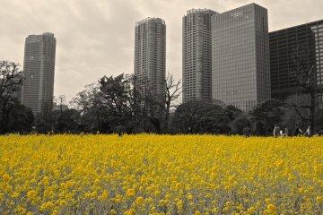 Yellow only color filter, Hamarikyu Garden