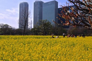 Tokyo Tower in the distance and a few plum blossoms in the front
