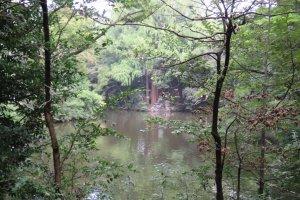 Pond at Hikawa Shrine