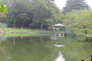 Omiya Park Pond