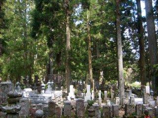 무덤과 숲의 밀도가 고요한 분위기를 낸다