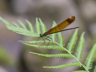Damselflies and ferns are also denizens of this causeway