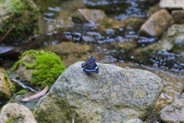 나비는 개울을 따라 이끼 낀 돌에 매혹되어 상상력을 자극한다