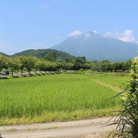 Сельскохозяйственные приключения в Хиросаки