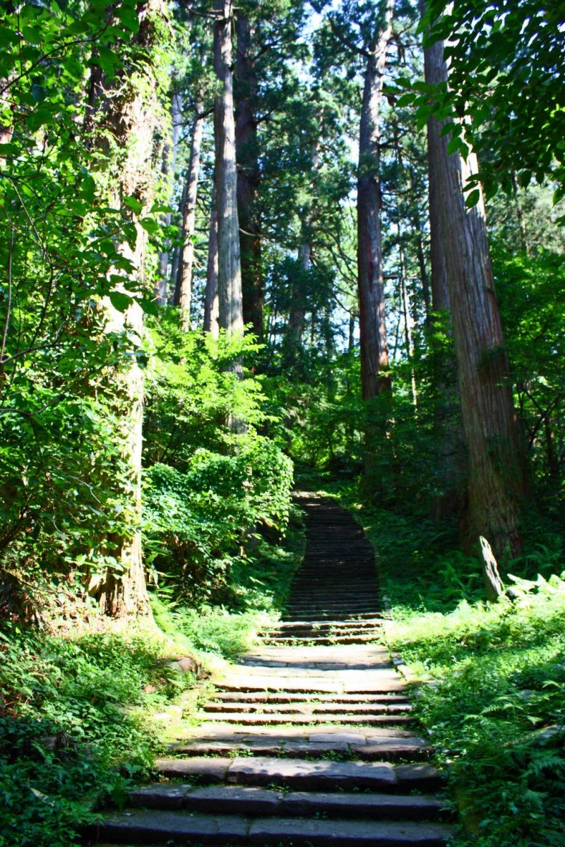 There are 2446 steps leading to the shrine complex at the summit - make sure to pace yourself!