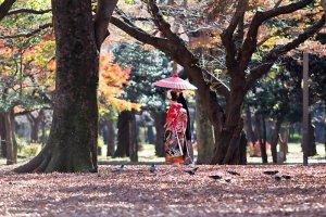 สวนโยะโยะกิ (Yoyogi) เป็นหนึ่งในสวนสาธารณะที่เก่าแก่ที่สุดในประเทศญี่ปุ่น