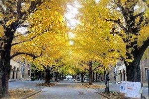 ถนนสียกิงโกะในมหาวิทยาลัยโตเกียว
