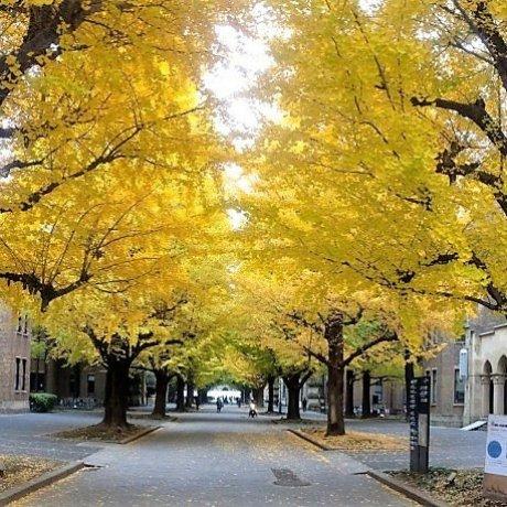 ชมใบไม้เปลี่ยนสีฟรี! ที่ไหนดีในโตเกียว