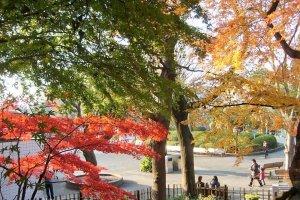 ใบไม้เมเปิ้ลในสวนอุเอะโนะ (Ueno)
