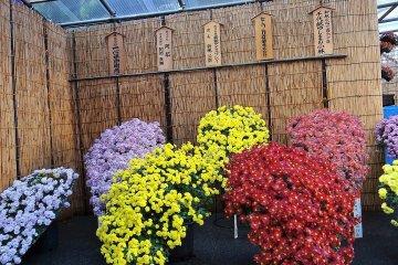 บุงเกียว คิคุ มัตซึตริ ที่ศาลเจ้า  Yushima Tenmangu
