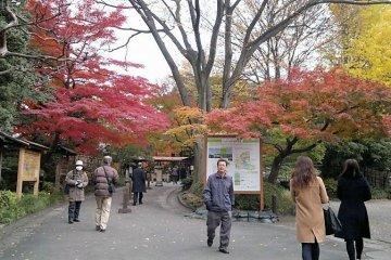 สัมผัสความงามของใบไม้เปลี่ยนสีในสวนญี่ปุ่น