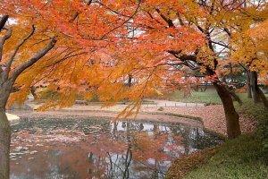 สระน้ำกลางสวนที่สะท้อนภาพสุดสวยของต้นไม้ใบไม้รอบสระ