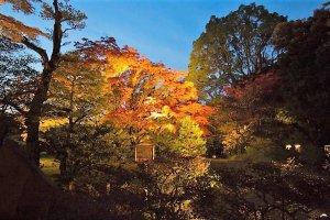 สวนริคุงิเอน (Rikugien) สวนญี่ปุ่นที่เก่าแก่อีกแห่งหนึ่งในโตเกียว